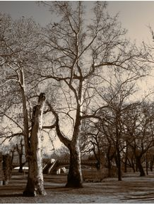 191706-PM-129-11