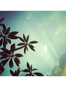 sky-green