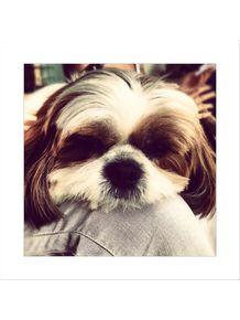 dogs-r-lazy