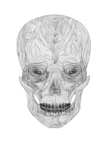 skull-in-line-ii