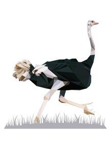 natureza-de-triangulos--avestruz