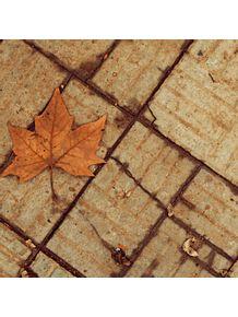 outono-ii