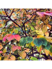 outono-1