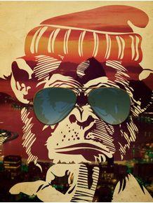 monkey-rio-de-janeiro
