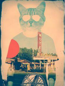 cool-cat