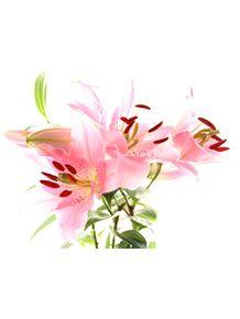flor-na-janela-n1