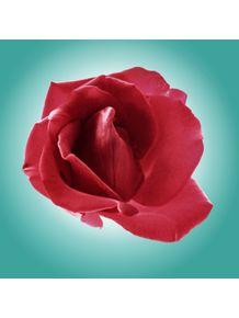 rosa-e-turquesa-n2