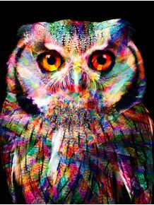 owl-colors