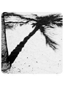 sombra-de-coqueiro-236