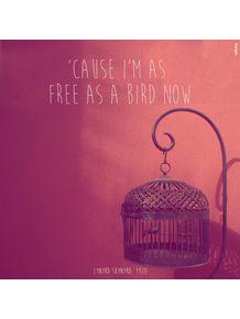 free-bird-ii