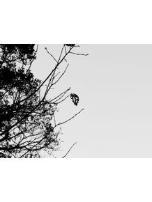 lonely-tree-leaf