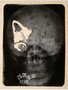 ypnk-skullcatto