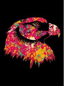eagle-splash-colors