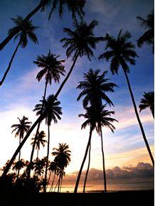 paraiso-tropical-ii