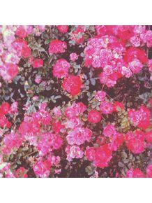 flores-da-praca