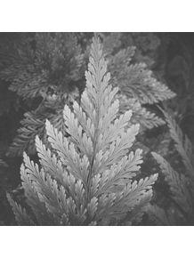 bw-leafs