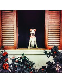 esperando-na-janela