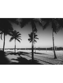 palmtrees-b