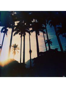 palmtrees-sunny