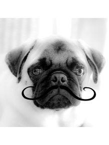 pug-noah-mustache