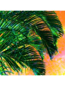 palmeira-1