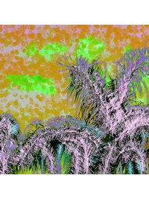palmeira-2