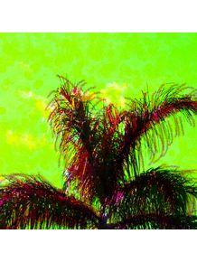 palmeira-3