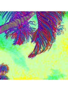 palmeira-4