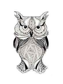 wide-eyed-owl