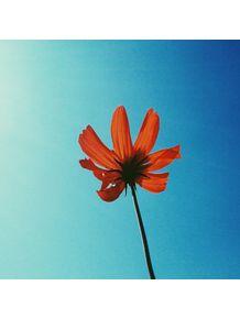 florir-i