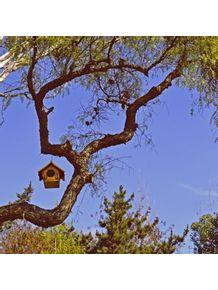 casa-de-passarinho