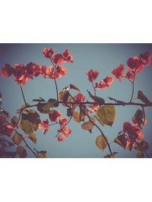 vejo-flores-em-voce