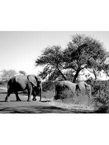 casal-de-elefantes