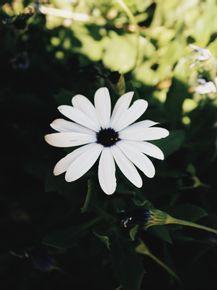 flor-branca-i