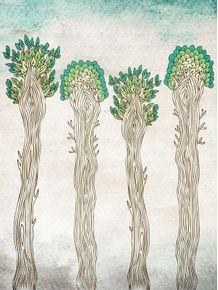 amazon-trees