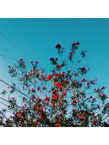 flor-e-ceu