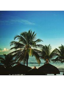 coqueiros-baianos