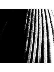 concha-em-preto-e-branco
