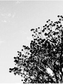 noise-tree-3