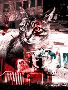 gatos-em-paranapiacaba-ii