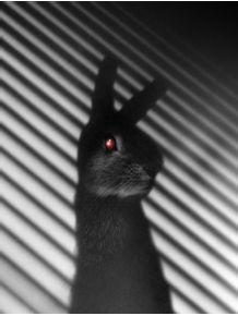 shadow-bunny