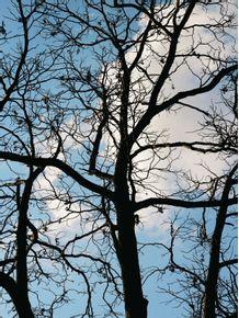 naked-tree-2