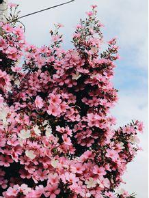 beautiful-flowers-1