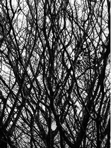 naked-tree-5