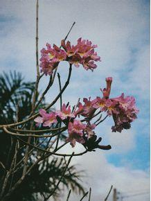 beautiful-flowers-3