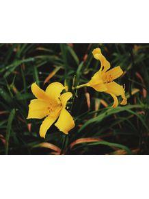 beautiful-flowers-4