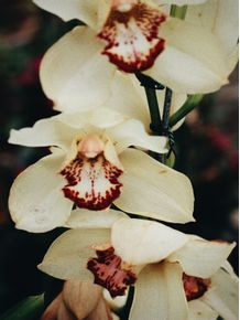 beautiful-flowers-6