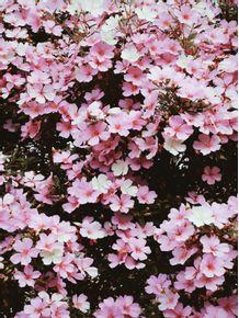 beautiful-flowers-7