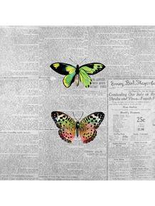 jornal-e-borboletas