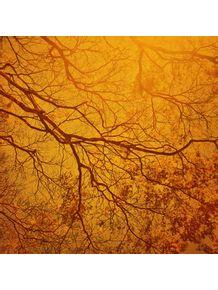 ramos-de-vida-ensolarados